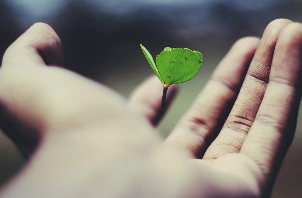 Hand mit Kleeblatt, Hoffnung, Yoga und Yogatherapie bei Trauma und PTBS